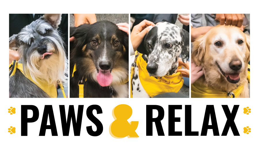 four photographs of dogs with yellow bandanas on a white background with black text
