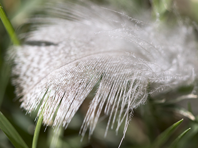 white feather in grass